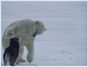 Polar4