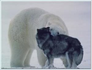 Polar6