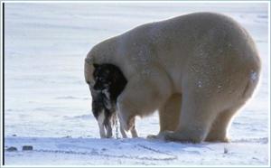 Polar7